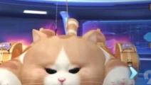 qq飞车手游猫车怎么改装 猫车改装技巧分享